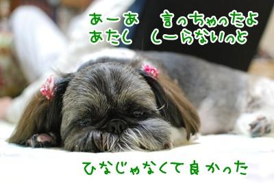 DSC_2528_20100613130425.jpg