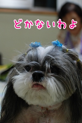 DSC_2550.jpg
