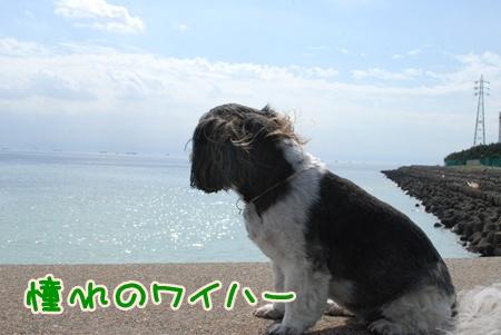 DSC_4309.jpg