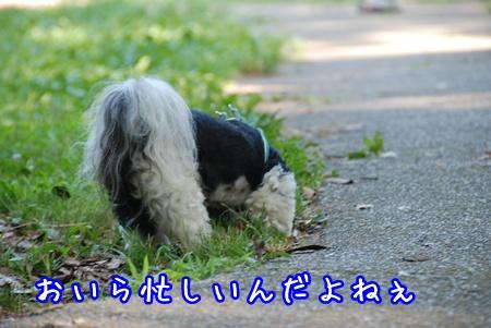 DSC_7526.jpg