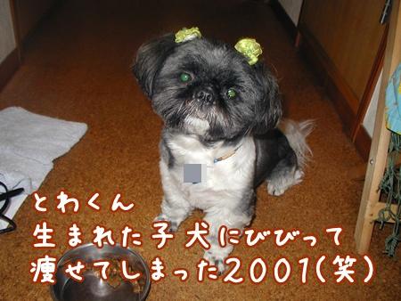 P1010059_20100910215648.jpg