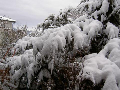 積雪08-1-21