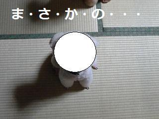 027 - コピー