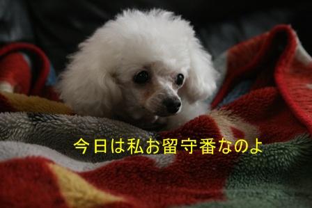 IMG_3691i.jpg