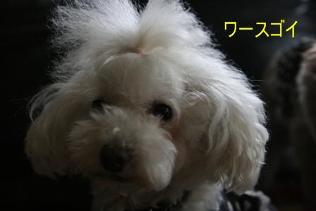 IMG_8043h.jpg