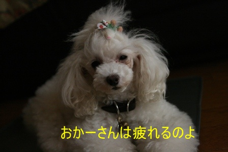 IMG_9611h.jpg