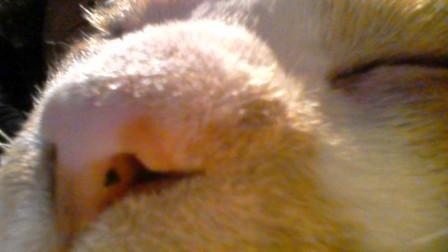 鼻ホクロ4