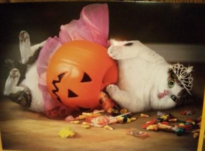 かぼちゃカード