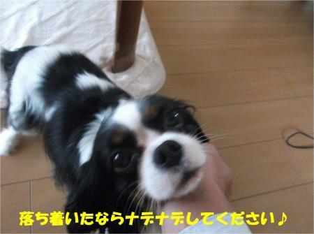 03_convert_20141021180842.jpg