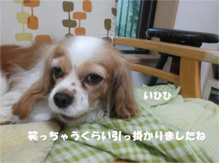 05_convert_20141008175043.jpg
