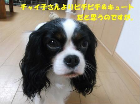 06_convert_20141002182523.jpg