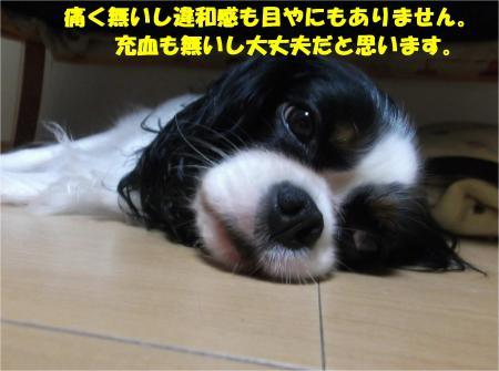 08_convert_20141007174628.jpg