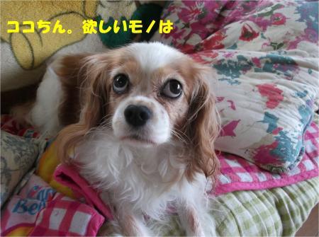 09_convert_20140926181633.jpg