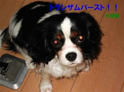 nt009_convert_20120131170225[1]_convert_20120131180512[1]