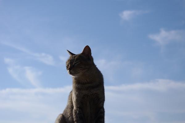 茜浜の猫20101023
