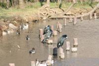 徳生公園9