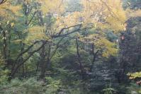 都筑の森の秋2010-5
