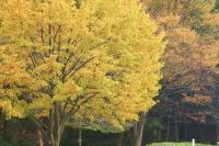 都筑の森の秋2010-4