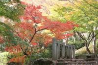 都筑の森の秋2010-3
