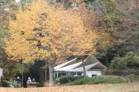 都筑の森の秋2010-2