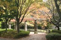 都筑の森の秋2010-1