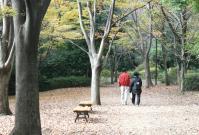 都筑の森の秋2010-10