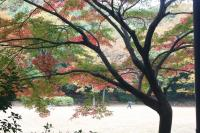 都筑の森の秋2010-8