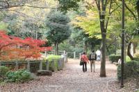 都筑の森の秋2010-9