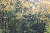 都筑の森の秋2010-6