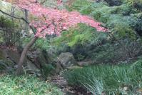 都筑の森の秋2010-15