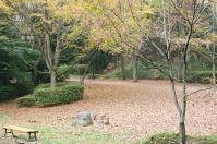 都筑の森の秋2010-13