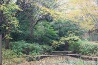 都筑の森の秋2010-14