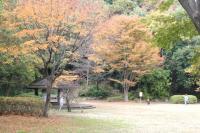 都筑の森の秋2010-12