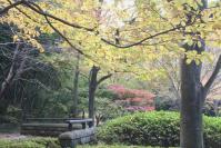都筑の森の秋2010-11