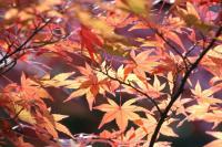 都筑の森の秋2010-20