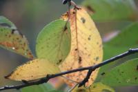 都筑の森の秋2010-18