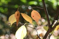 都筑の森の秋2010-17