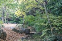 都筑の森の秋2010-16