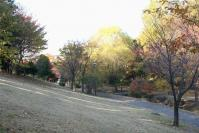 錦繍の森2010-05