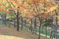 錦繍の森2010-04