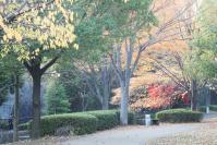 錦繍の森2010-13