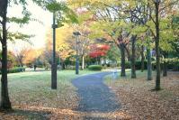 錦繍の森2010-12