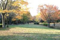 錦繍の森2010-11