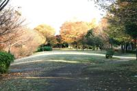 錦繍の森2010-10