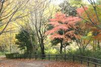 錦繍の森2010-18