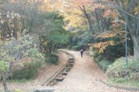 錦繍の森2010-14