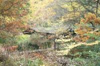 錦繍の森2010-19