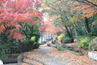 錦繍の森2010-24