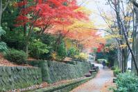 錦繍の森2010-23