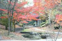 錦繍の森2010-21